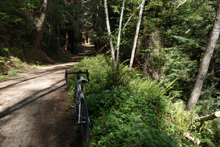 My favorite place to stop for a photo on the Haul Road, shortly before the left fork to Memorial Park.