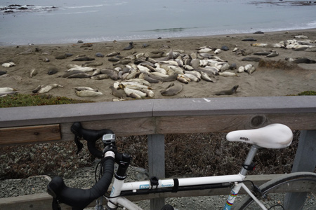 Elephant seals like to sleep on the beach a few miles north of San Simeon.