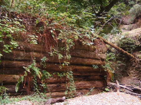 Remnant of the historic Gazos Creek dam used to pen logs at the turn of the century.