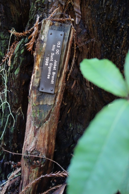 A tree dedication thanks to Sempervirens Fund efforts.
