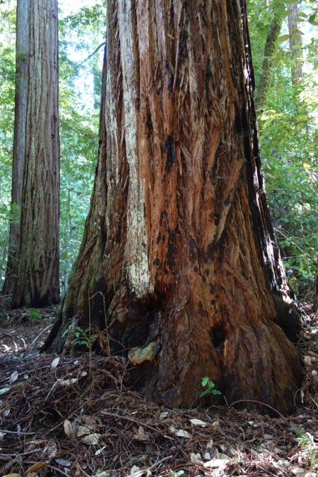My Jobst Redwood is just off North Escape Road at Opal Creek.