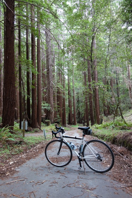 Honor Camp Road's redwood cathedral.