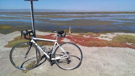 Alviso levy on a warm morning.