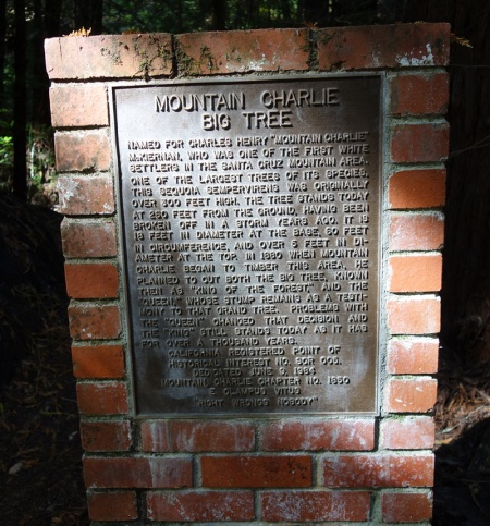"""The plaque next to the tree has all the details. The """"Queen"""" is about 100 feet away."""