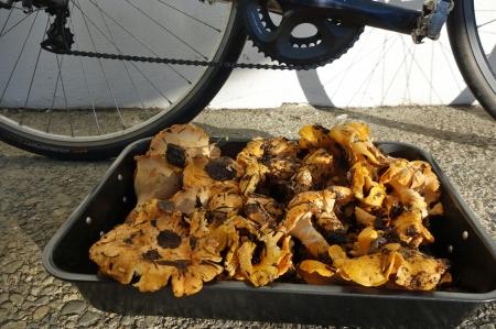 It wasn't all bad news. Mushrooms a plenty.